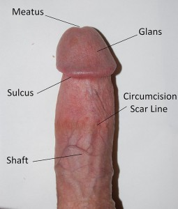 Circumcised_penis_edit